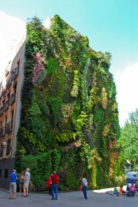 Stranezze di Madrid: il giardino verticale!